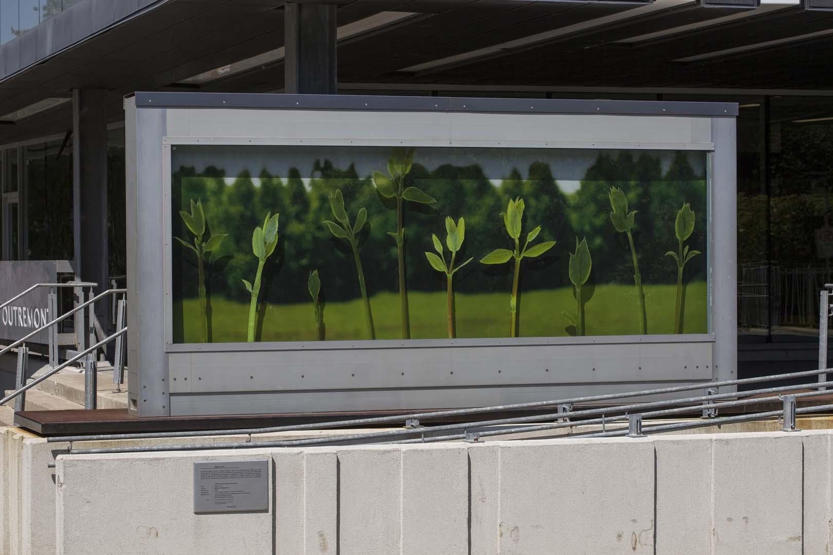 Espace vert art public montr al for Cat espace vert